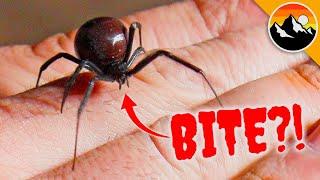 WILL IT BITE?! Black Widow Challenge Tests Nerves!