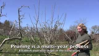 Pruning Apple Trees: How and When For Both Old And Young Trees