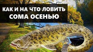 Виртуальная рыбалка на сома осенью