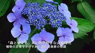 """ラジオドラマ""""森と奏でる""""#5"""