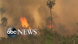 Amazon rainforest on fire: 'Lungs of the world' in flames l Nightline
