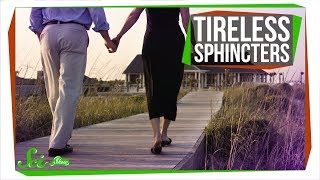 Why Doesn't Your Sphincter Get Tired?