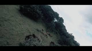 DRONE FPV voando junto aos CAVALOS