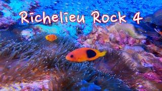 魚・魚・サンゴ・ダイバー  24 ⛵️  Fish, coral, diver 【水中動画・GoPro 】可愛い魚がいっぱい‼︎Lots of cute fish 🐡 Richelieu Rock