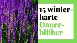 15 winterharte Dauerblüher - Stauden für Garten, Kübel und Balkon
