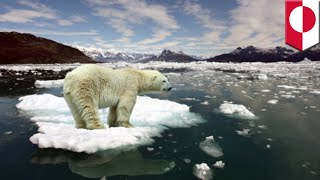 Arctic warming: North Pole starts to thaw in the middle of winter, scientists alarmed - TomoNews