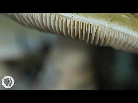 Nakatira doon sa mata ng mga parasito