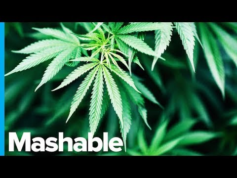 World Health Organization Recognizes Cannabis as a Medicine and Proposes 'More Rational' Drug Laws