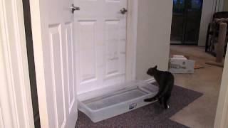 Смотреть онлайн Умный кот умеет открывать дверь