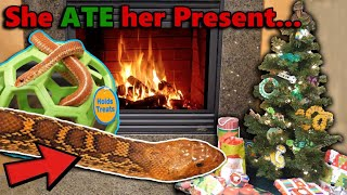 Our Reptiles Open their Christmas Gifts! by Snake Discovery