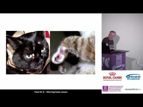 Пака М. В. - Мастоцитомы кошек