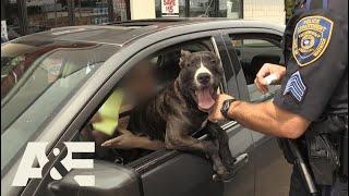Live PD: Illegal Lap Dog (Season 2) | A&E