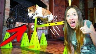 ПОЛОСА ПРЕПЯТСТВИЙ ДЛЯ СОБАКИ ДЖИНЫ ПРУЖИНЫ, а в доме МИСТИКА | Дом Призрак Elli Di Pets