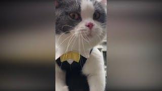 Приколы с животными коты и собаки за Январь 2019 #5 Кошки веселятся до слез. Я ржал пол часа 2019