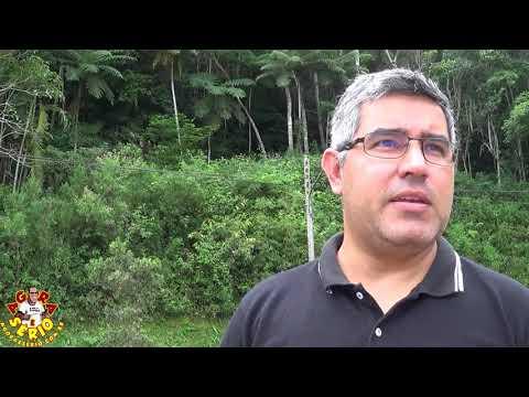 Diretor de Obras Carlos Lago explica que já foi apaziguado a desinteligência entre o Vereador e a Engenheira e está autorizado o corte da arvore na Rua Antonio Dezpézio