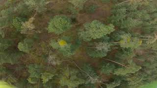 RAW FPV Freestyle Sunday Chillout Flying - Even More Trees - Impulse Reverb 6s Video 3/3