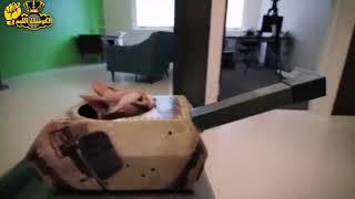 تحميل اغاني لقطات نادره لشجاعة القط مياو المشمشي في حرب اكتوبر ???? MP3