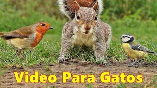 Videos Para Gatos - El video favorito de tus gatos