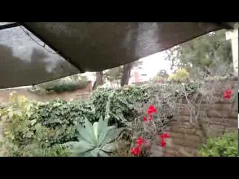 Ana & Pavan - Hummingbird Chick Release March 2,2014