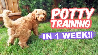 HOW TO: Potty Train Your Puppy FAST!! 🐶 10 week old puppy trained in 1 WEEK!!!