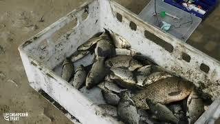 Рыбалка на салтаиме омская область