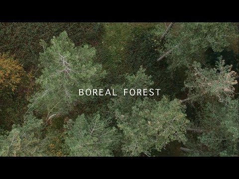Boreal Forest – Mammal Hands
