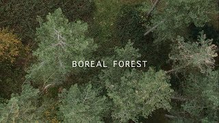 Mammal Hands - Boreal Forest