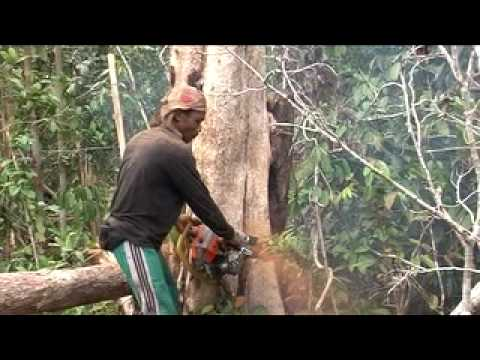 Download Deadly Oil Palm 2 HD Mp4 3GP Video and MP3