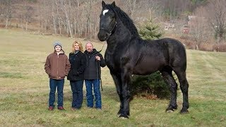 5 Most Unique Horses in the World!