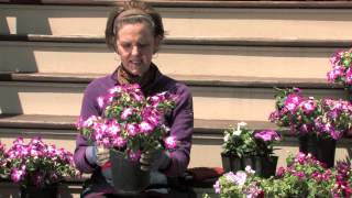 Care and Watering of the Impatiens Plant : More Gardening Advice