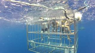 preview picture of video 'Hawaii 2014 - Shark Cage @ North Shore Oahu'