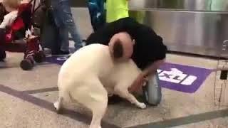 la-sua-cagnolina-torna-viva-l-abbraccio-del-cuoco-irpino