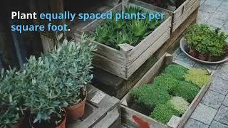 Square Foot Gardening – Gardening Made Easy