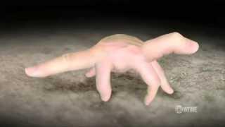 Эволюция на пальцах.Осторожно.Вынос мозга