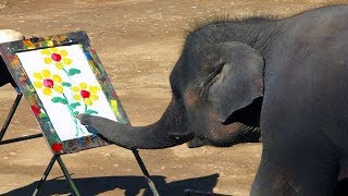 Top 10 Signs Animals Are Evolving And Getting Smarter