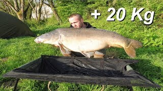 Carpe 21kg800 En Petite Rivière ( Combats, Poissons, Nokill...)