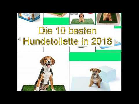Die 10 besten Hundetoilette in 2018