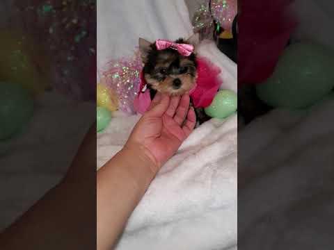 Tiny Zoey.    9 Weeks