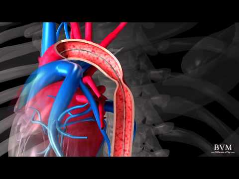 Medicamente hipertensiune