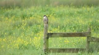 Hobbies on Otmoor RSPB: oxonbirding.blogspot.co.uk
