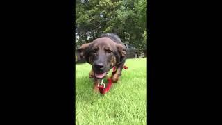 Прелестная собака поднимает настроение | Приколы до слез - Collab #51