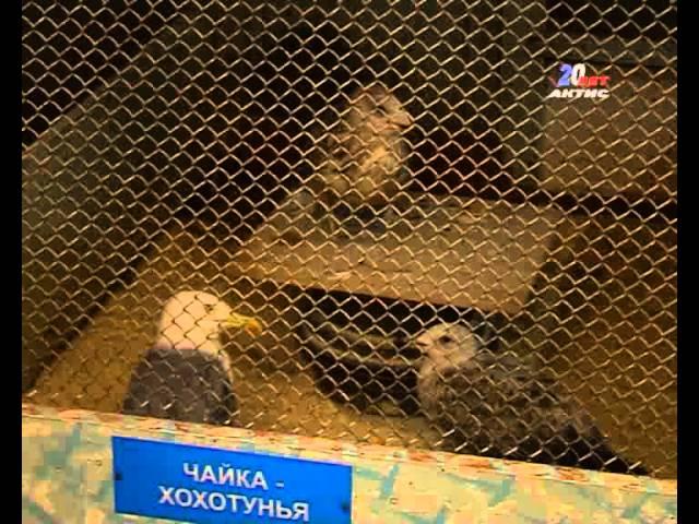 В Ангарском зоопарке животным не хватает места