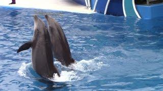 Dolphin Days at SeaWorld San Diego 5-14-16