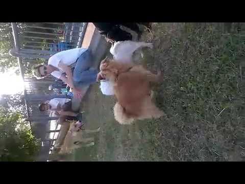 Macchina donna Sex Video