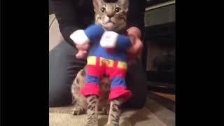 Смешные приколы с животными котами