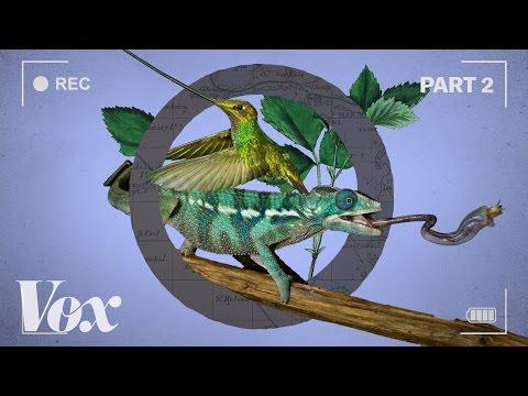 Zázračná planeta II: Jak přírodopisné dokumenty ohýbají čas - Vox