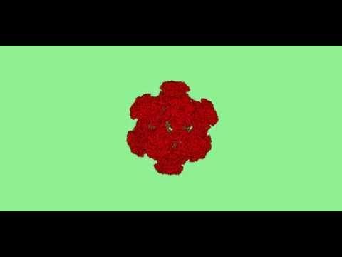 Papilloma vírus oltási ütemezése