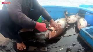 Ngày câu t5 NHIỀU CÁ MỚI, CÁ TO NHẤT/đi câu cá ở đảo Hoàng Sa - Lữ Hành Tv
