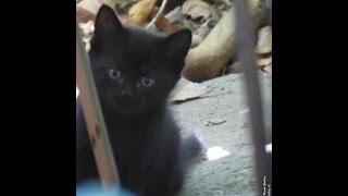 Katze Mimi - Freilaufende Baby - Katzen beim Spielen