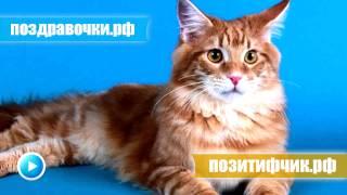 Кот крикливо мяукает - выходка надо своим котом ))